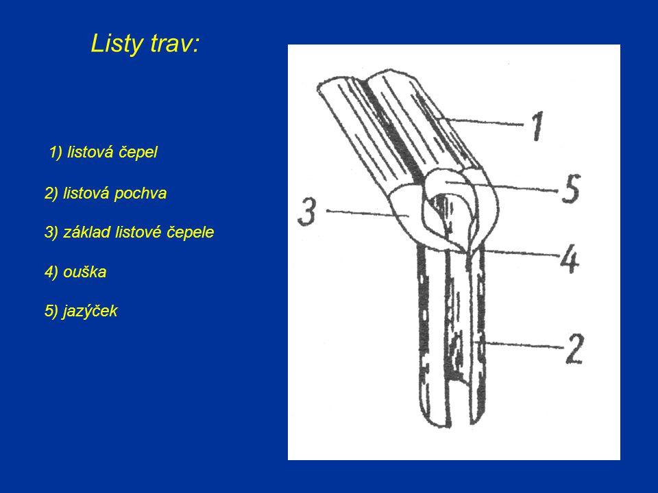 Listy trav: 1) listová čepel 2) listová pochva 3) základ listové čepele 4) ouška 5) jazýček