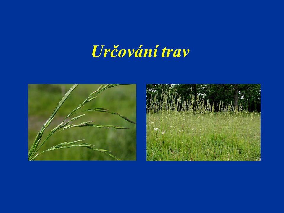 Určování trav