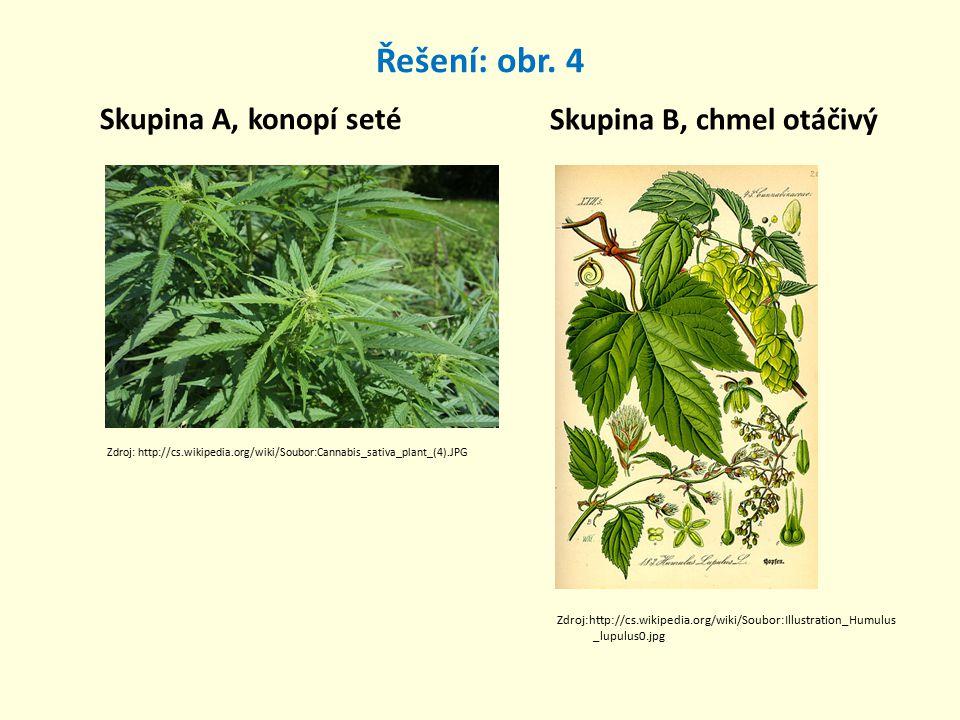 Řešení: obr. 4 Skupina A, konopí seté Skupina B, chmel otáčivý Zdroj: http://cs.wikipedia.org/wiki/Soubor:Cannabis_sativa_plant_(4).JPG Zdroj:http://c