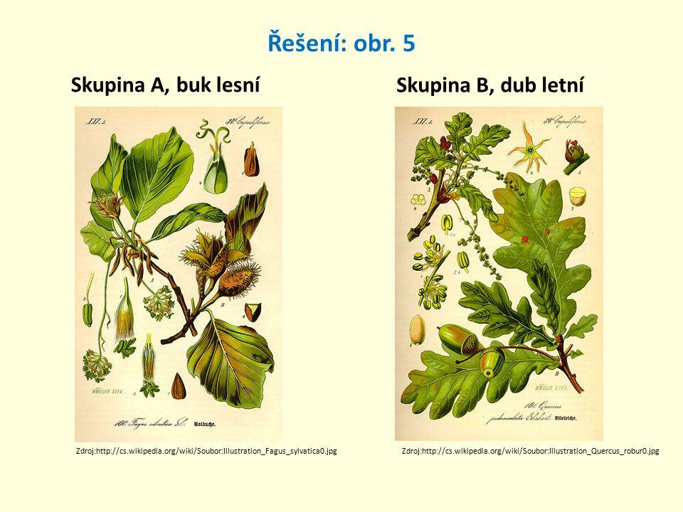 Řešení: obr. 5 Skupina A, buk lesní Skupina B, dub letní Zdroj:http://cs.wikipedia.org/wiki/Soubor:Illustration_Fagus_sylvatica0.jpgZdroj:http://cs.wi