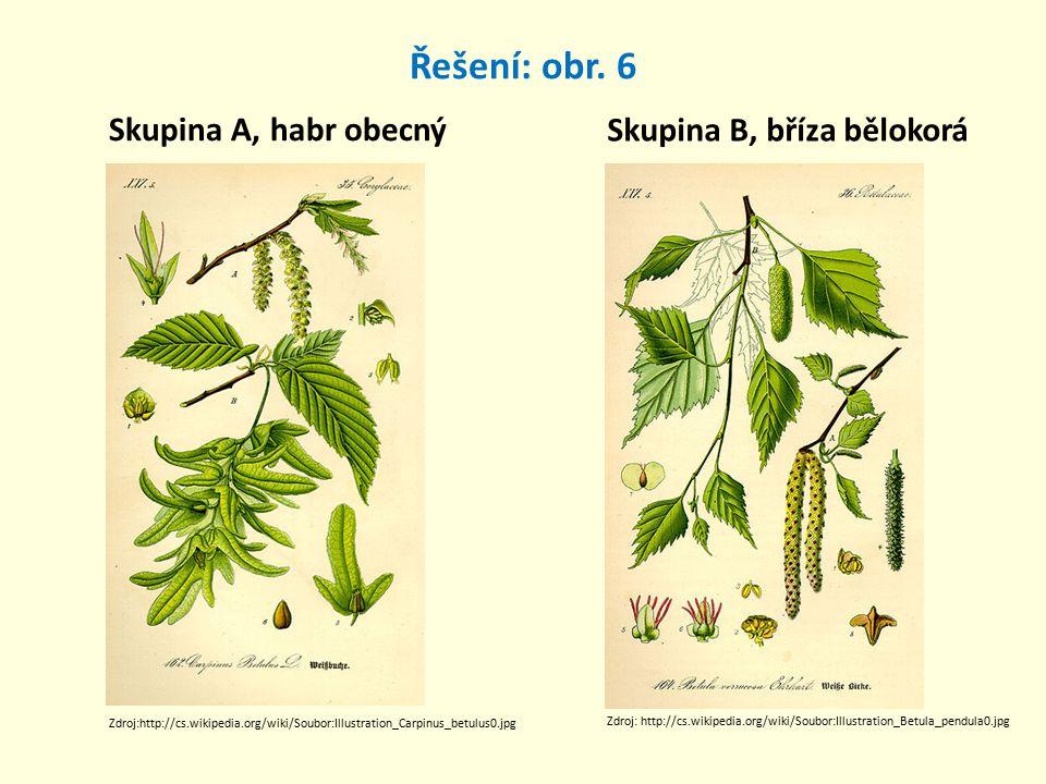 Řešení: obr. 6 Skupina A, habr obecný Skupina B, bříza bělokorá Zdroj:http://cs.wikipedia.org/wiki/Soubor:Illustration_Carpinus_betulus0.jpg Zdroj: ht
