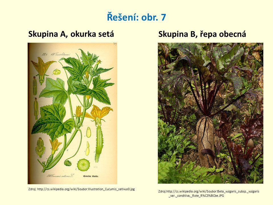 Řešení: obr. 7 Skupina A, okurka setá Skupina B, řepa obecná Zdroj: http://cs.wikipedia.org/wiki/Soubor:Illustration_Cucumis_sativus0.jpg Zdroj:http:/