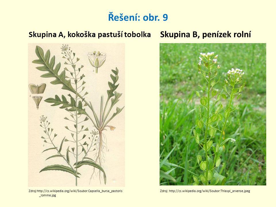 Řešení: obr. 9 Skupina A, kokoška pastuší tobolka Skupina B, penízek rolní Zdroj:http://cs.wikipedia.org/wiki/Soubor:Capsella_bursa_pastoris _lomme.jp