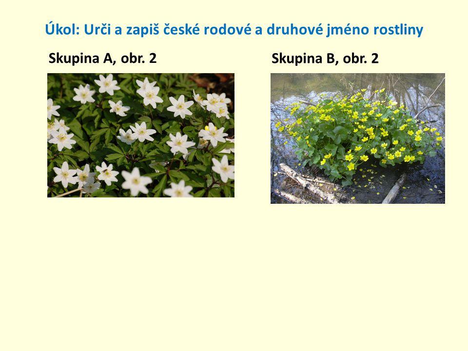 Úkol: Urči a zapiš české rodové a druhové jméno rostliny Skupina A, obr. 2 Skupina B, obr. 2