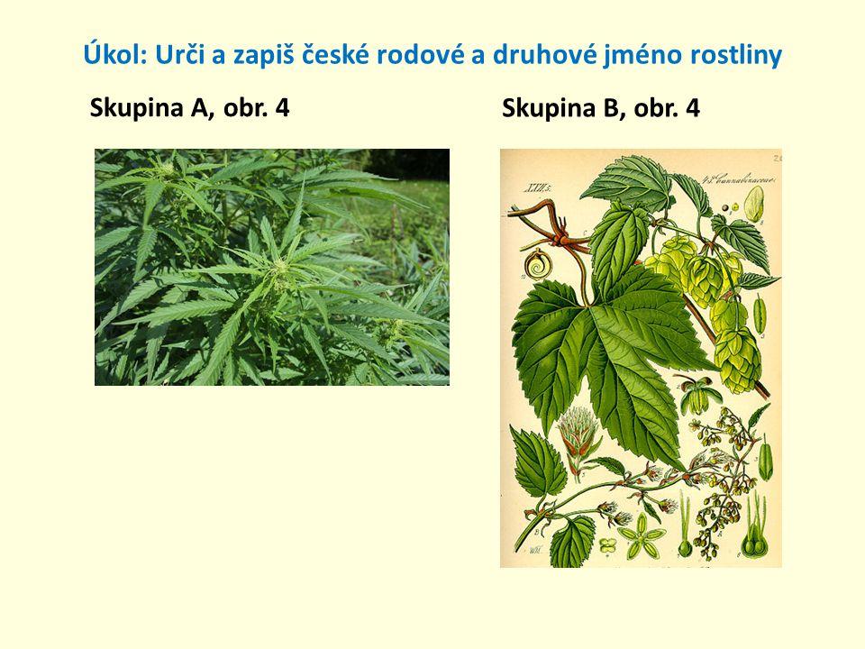 Úkol: Urči a zapiš české rodové a druhové jméno rostliny Skupina A, obr. 4 Skupina B, obr. 4