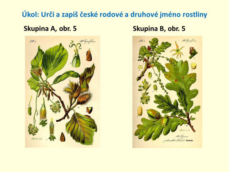 Úkol: Urči a zapiš české rodové a druhové jméno rostliny Skupina A, obr. 6 Skupina B, obr. 6