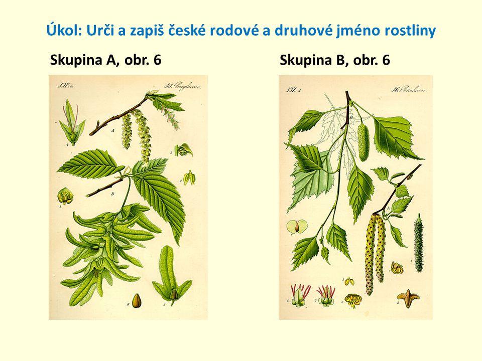 Úkol: Urči a zapiš české rodové a druhové jméno rostliny Skupina A, obr. 7 Skupina B, obr. 7