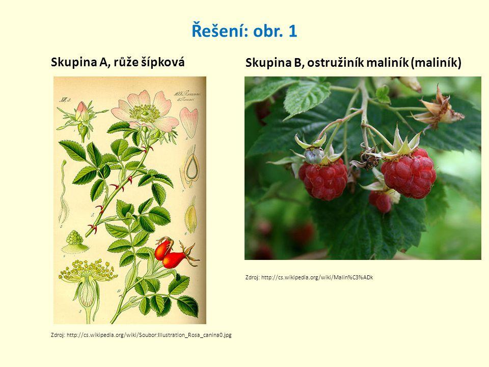 Řešení: obr. 1 Skupina A, růže šípková Skupina B, ostružiník maliník (maliník) Zdroj: http://cs.wikipedia.org/wiki/Soubor:Illustration_Rosa_canina0.jp