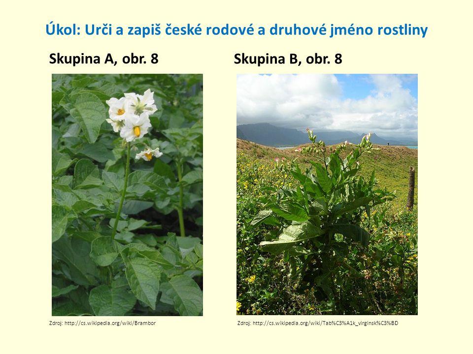 Úkol: Urči a zapiš české rodové a druhové jméno rostliny Skupina A, obr. 8 Skupina B, obr. 8 Zdroj: http://cs.wikipedia.org/wiki/BramborZdroj: http://