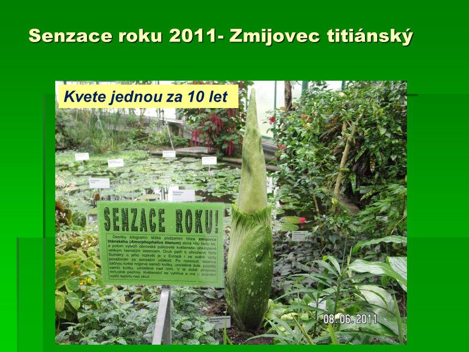 Senzace roku 2011- Zmijovec titiánský Kvete jednou za 10 let