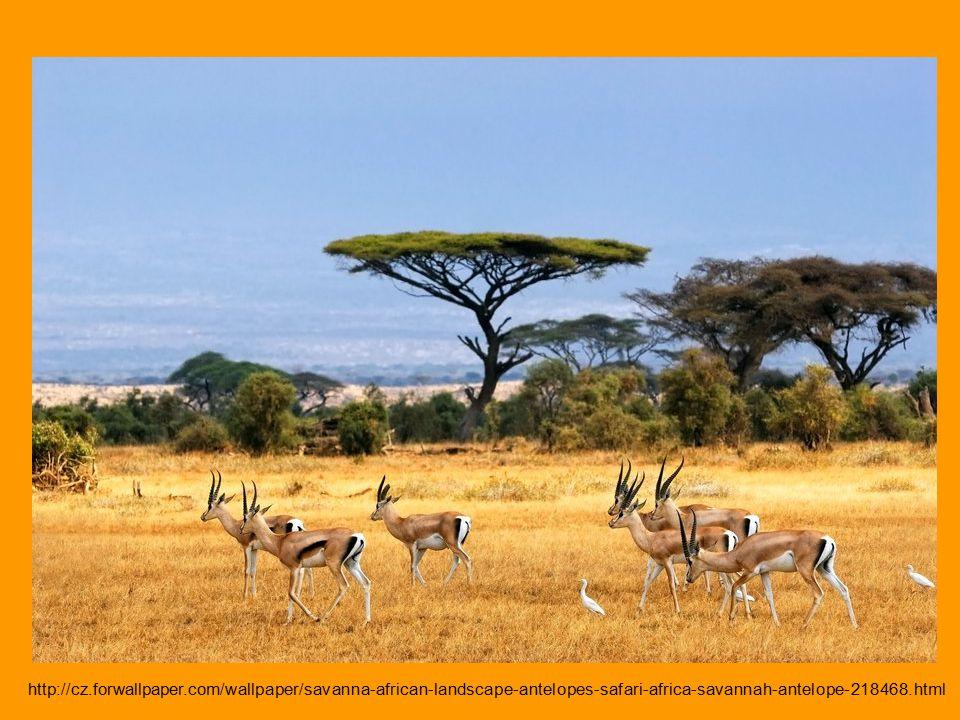 http://cz.forwallpaper.com/wallpaper/savanna-african-landscape-antelopes-safari-africa-savannah-antelope-218468.html