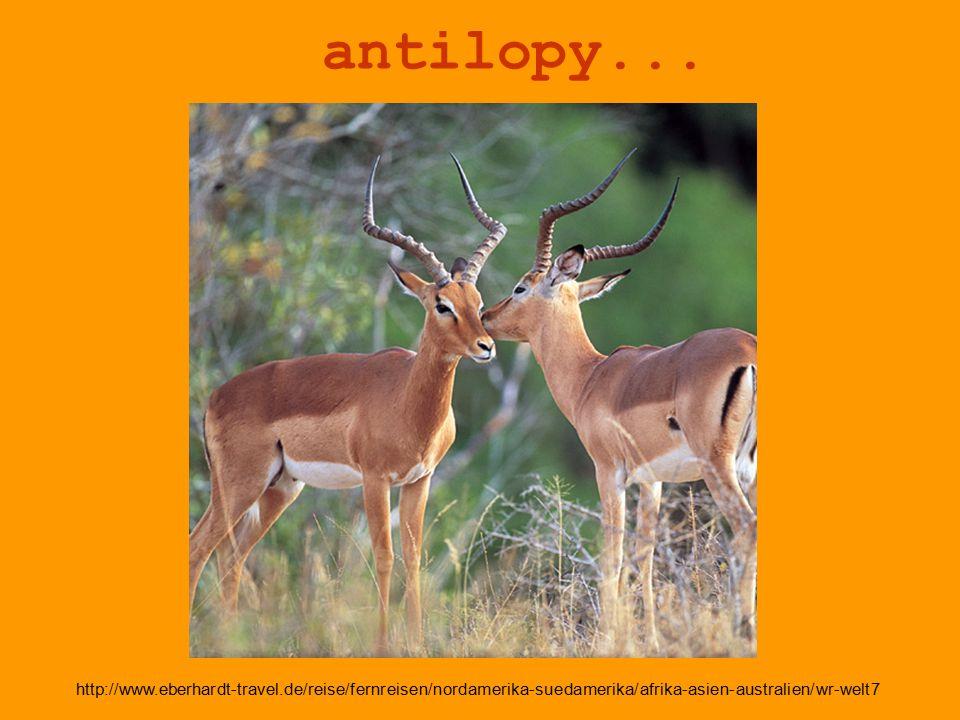antilopy... http://www.eberhardt-travel.de/reise/fernreisen/nordamerika-suedamerika/afrika-asien-australien/wr-welt7