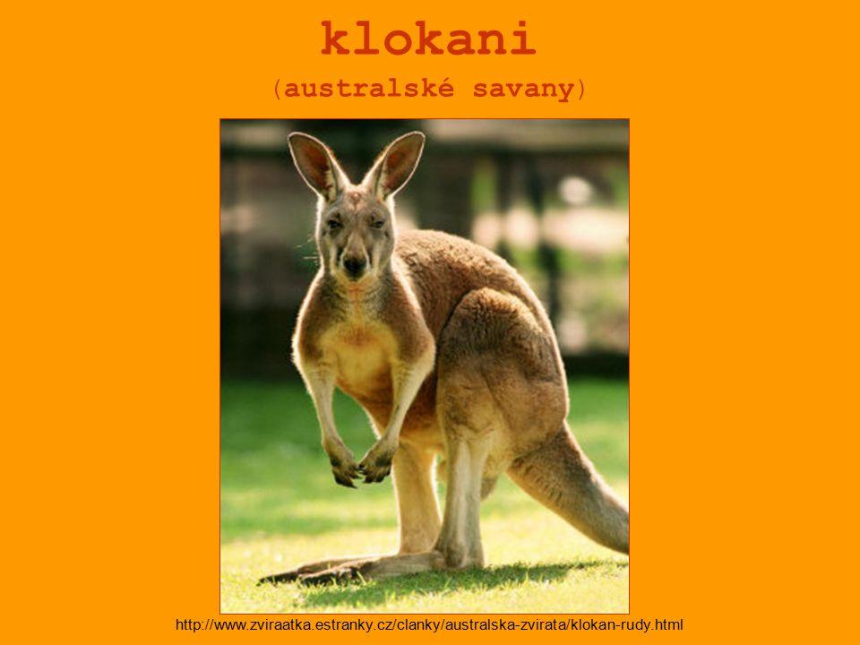 klokani (australské savany) http://www.zviraatka.estranky.cz/clanky/australska-zvirata/klokan-rudy.html
