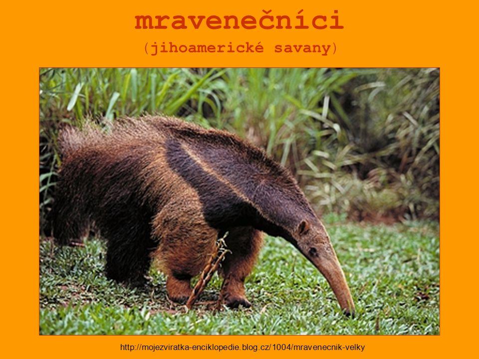 mravenečníci (jihoamerické savany) http://mojezviratka-enciklopedie.blog.cz/1004/mravenecnik-velky