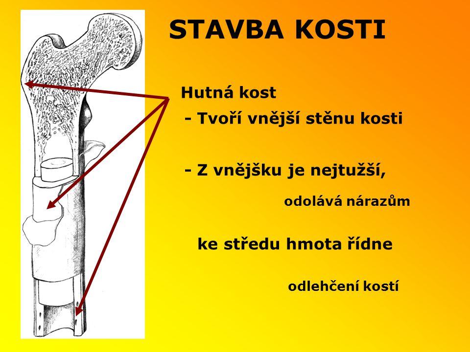 - Tvoří vnější stěnu kosti Hutná kost ke středu hmota řídne - Z vnějšku je nejtužší, odolává nárazům odlehčení kostí