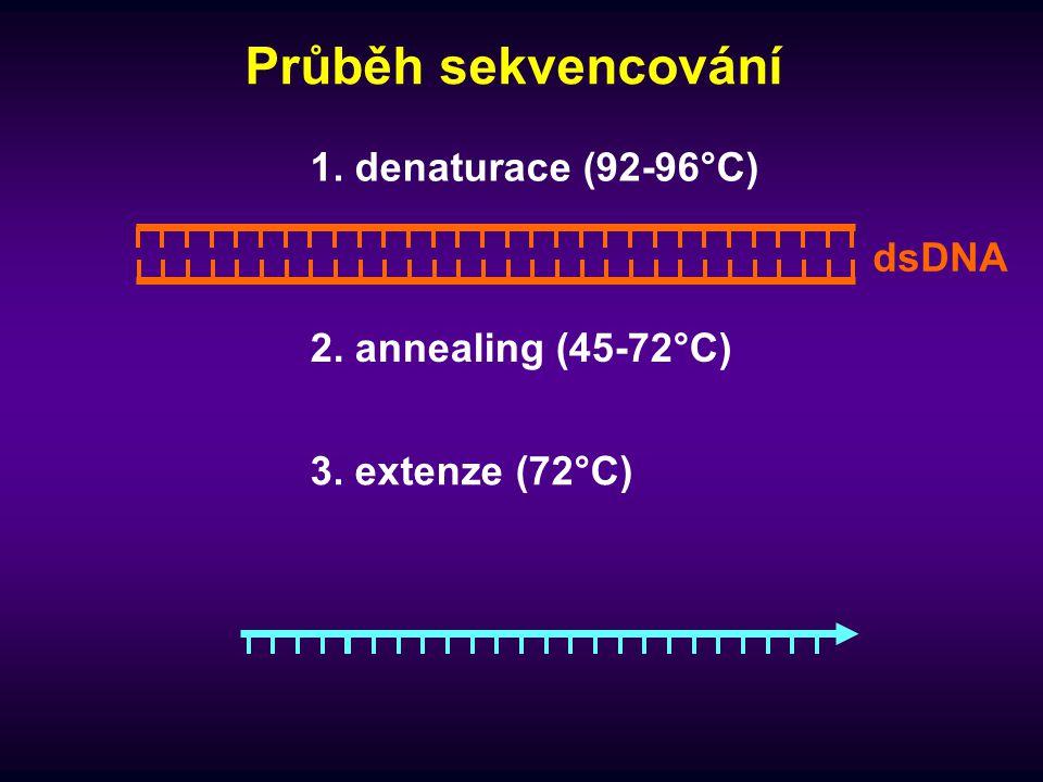 Průběh sekvencování 1. denaturace (92-96°C) 2. annealing (45-72°C) dsDNA 3. extenze (72°C)