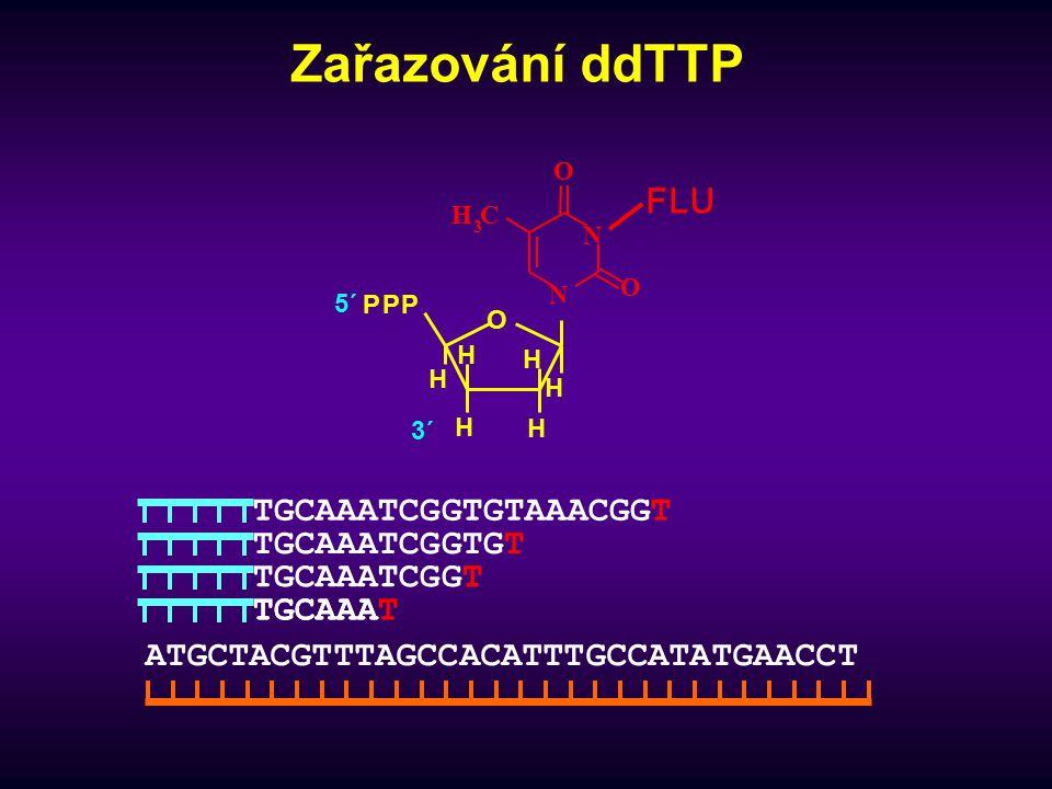 Zařazování dalších ddNTP ATGCTACGTTTAGCCACATTTGCCATATGAACCT TGCAAA TGCAA TGCA TGCAAATCGGTGTA ATGCTACGTTTAGCCACATTTGCCATATGAACCT TGCAAATCC TGCAAATC TGC TGCAAATCGGTGTAAAC