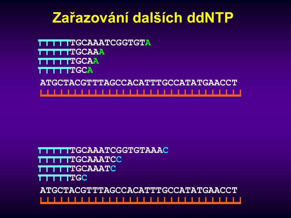 Výsledek sekvencování TGCAAA TGCAA TGCA TGCAAATCGGTGTA TGCAAATCC TGCAAATC TGC TGCAAATCGGTGTAAAC TGCAAA TGCAAATCGGTGT TGCAAATCGGT TGCAAAT TGCAAATCGGTGTAAACGGT TGCAAATCG TGCAAATCGG TGCAAATCGGTG TGTG