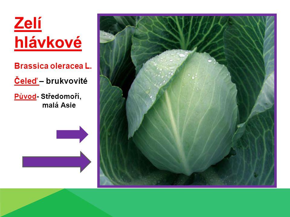 Zelí hlávkové Brassica oleracea L. Čeleď – brukvovité Původ- Středomoří, malá Asie