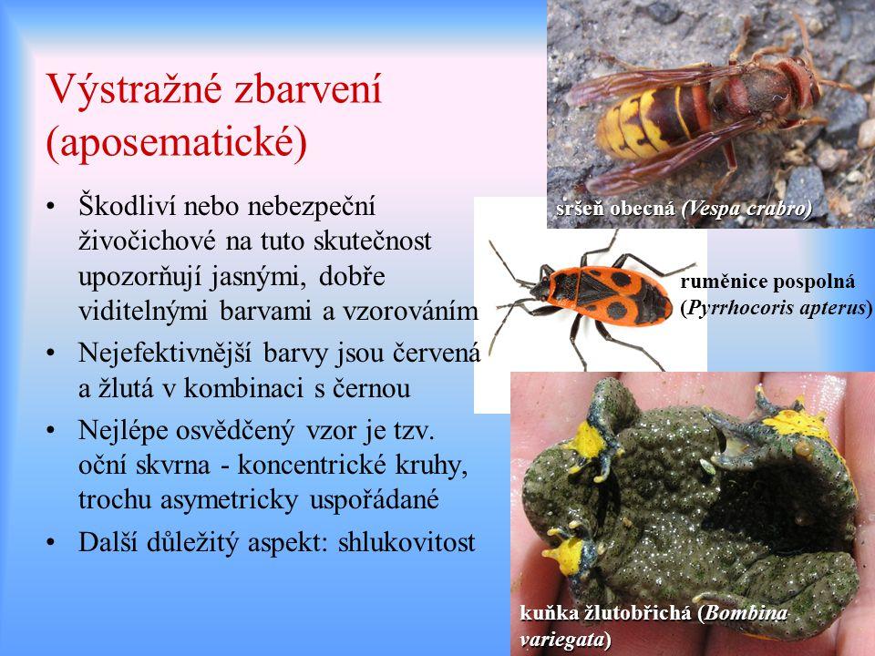 Výstražné zbarvení (aposematické) Škodliví nebo nebezpeční živočichové na tuto skutečnost upozorňují jasnými, dobře viditelnými barvami a vzorováním N