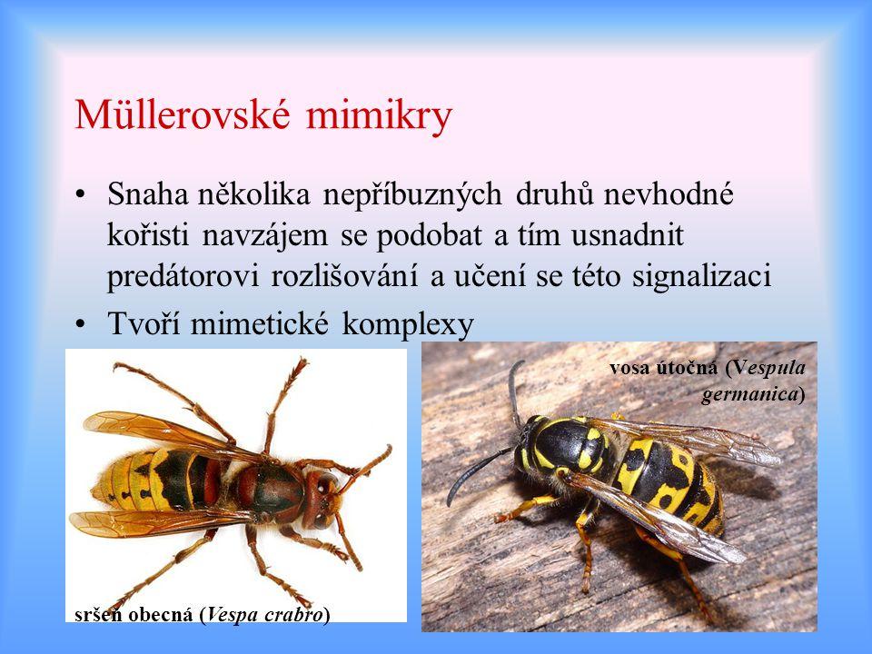 Müllerovské mimikry Snaha několika nepříbuzných druhů nevhodné kořisti navzájem se podobat a tím usnadnit predátorovi rozlišování a učení se této sign