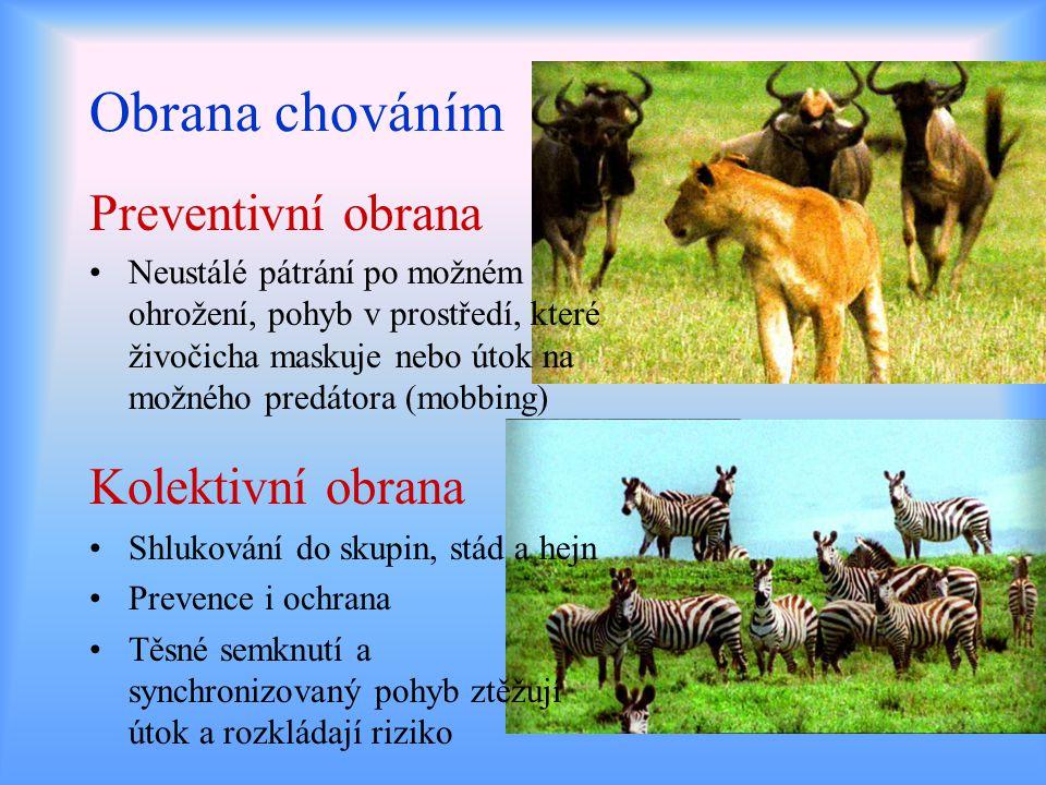 Obrana chováním Preventivní obrana Kolektivní obrana Neustálé pátrání po možném ohrožení, pohyb v prostředí, které živočicha maskuje nebo útok na možn