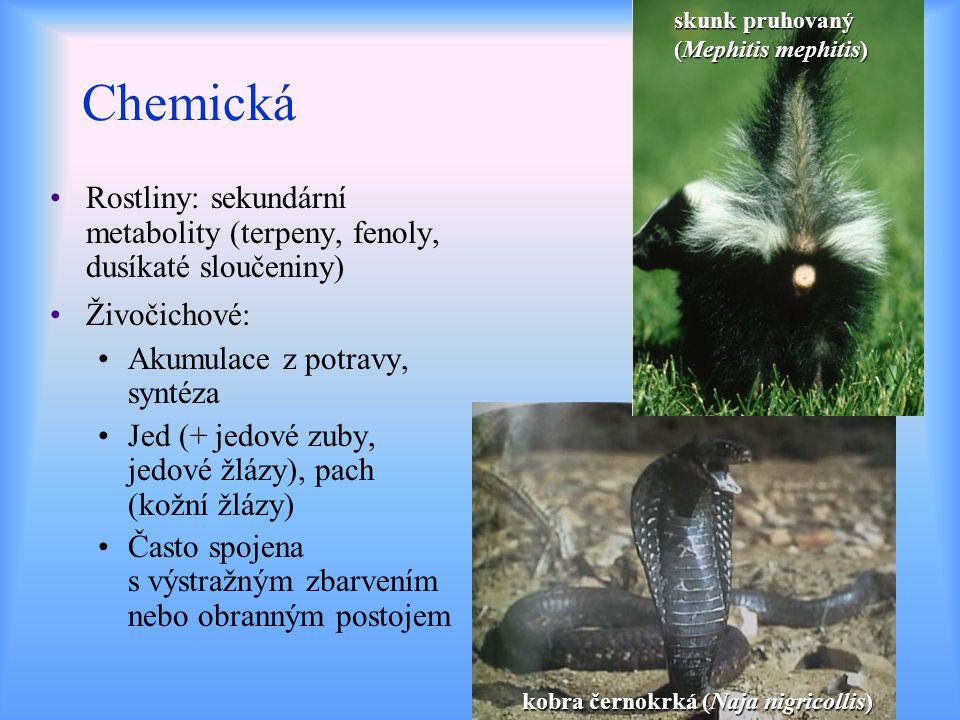Chemická Rostliny: sekundární metabolity (terpeny, fenoly, dusíkaté sloučeniny) Živočichové: Akumulace z potravy, syntéza Jed (+ jedové zuby, jedové ž