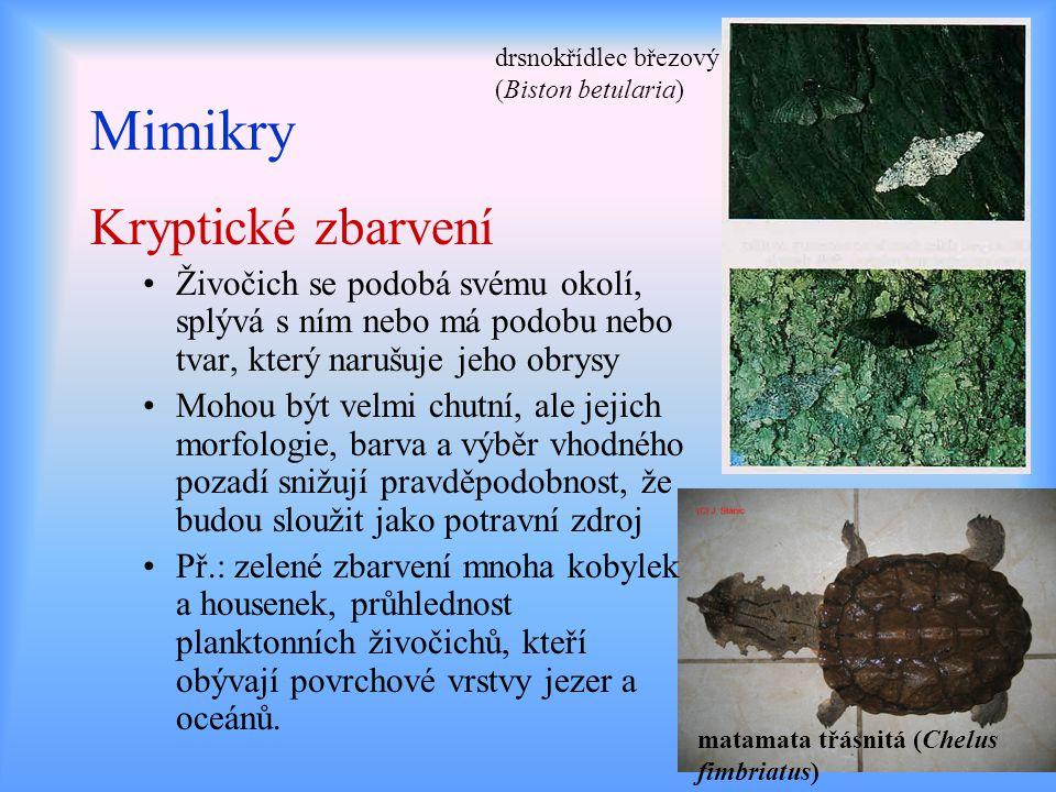 Mimikry Kryptické zbarvení Živočich se podobá svému okolí, splývá s ním nebo má podobu nebo tvar, který narušuje jeho obrysy Mohou být velmi chutní, a