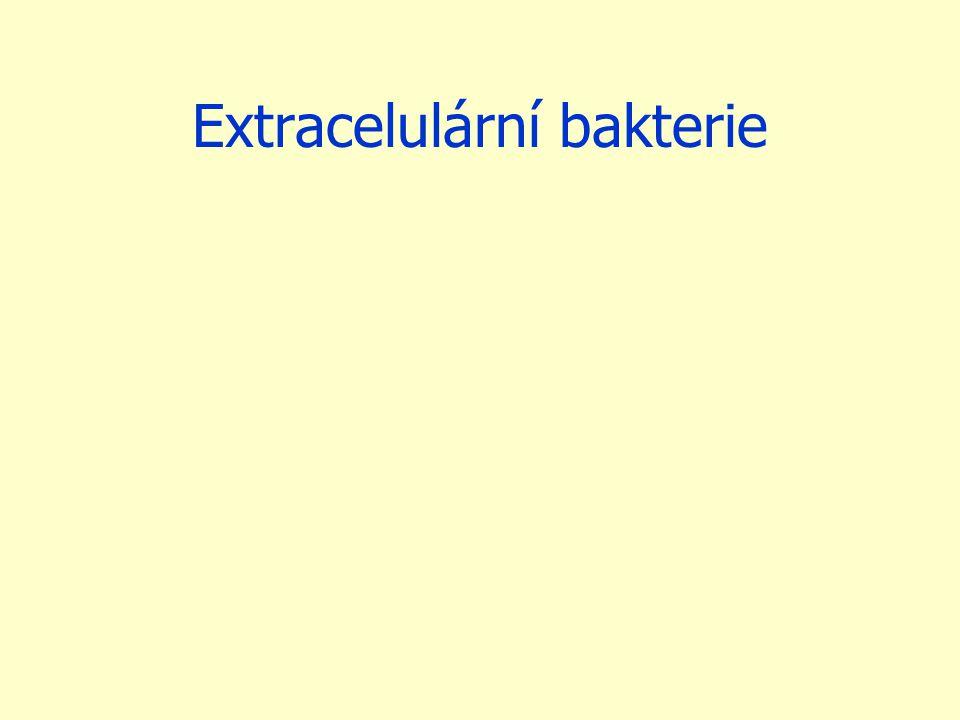 Extracelulární bakterie