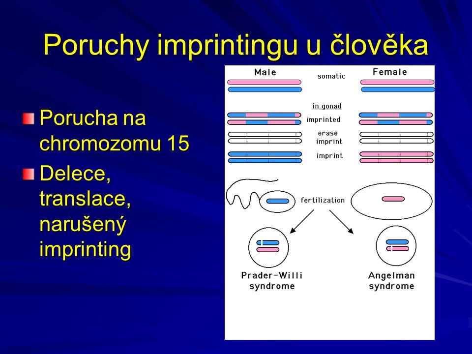 Poruchy imprintingu u člověka Porucha na chromozomu 15 Delece, translace, narušený imprinting
