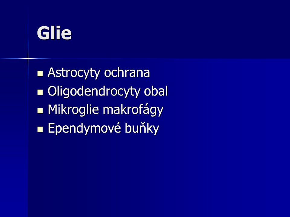Glie Astrocyty ochrana Astrocyty ochrana Oligodendrocyty obal Oligodendrocyty obal Mikroglie makrofágy Mikroglie makrofágy Ependymové buňky Ependymové buňky