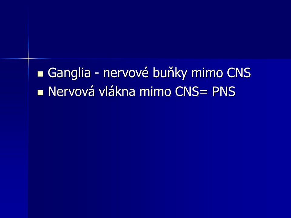 Ganglia - nervové buňky mimo CNS Ganglia - nervové buňky mimo CNS Nervová vlákna mimo CNS= PNS Nervová vlákna mimo CNS= PNS