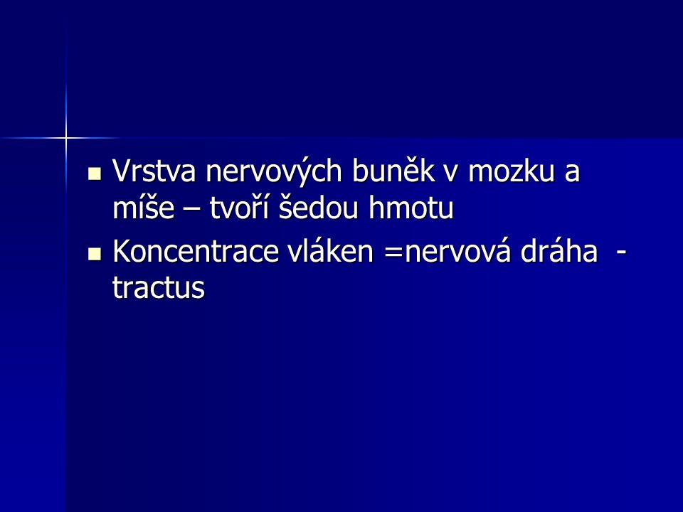 Vrstva nervových buněk v mozku a míše – tvoří šedou hmotu Vrstva nervových buněk v mozku a míše – tvoří šedou hmotu Koncentrace vláken =nervová dráha - tractus Koncentrace vláken =nervová dráha - tractus