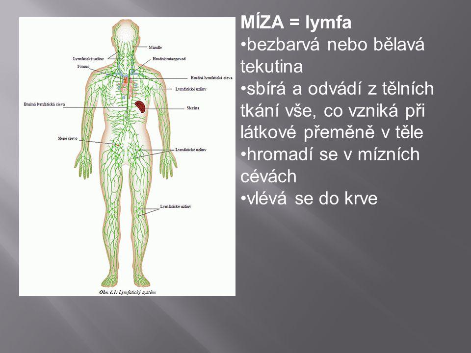 MÍZA = lymfa bezbarvá nebo bělavá tekutina sbírá a odvádí z tělních tkání vše, co vzniká při látkové přeměně v těle hromadí se v mízních cévách vlévá