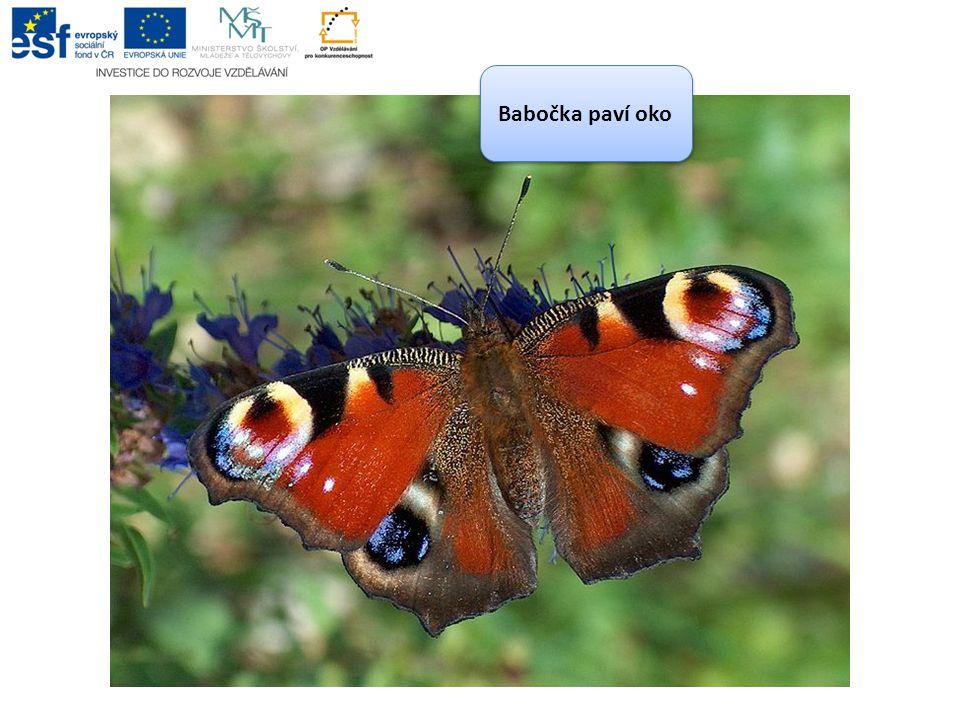 POUŽITÉ ZDROJE Motýli.In: Wikipedia: the free encyclopedia [online].