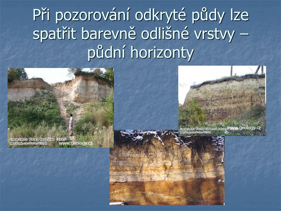 Při pozorování odkryté půdy lze spatřit barevně odlišné vrstvy – půdní horizonty www.geology.cz