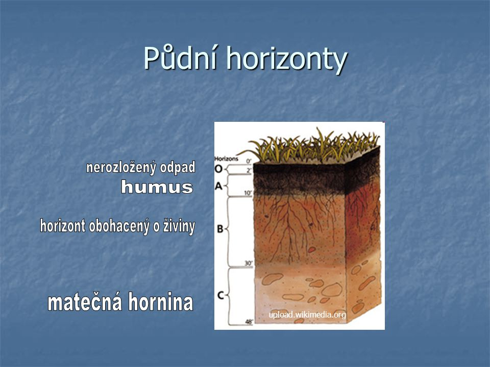 Půdní typy (určují se podle uspořádání půdních horizontů): černozem (obsahuje nejvíce humusu - nejúrodnější) černozem (obsahuje nejvíce humusu - nejúrodnější) hnědozem (méně úrodná než černozem) hnědozem (méně úrodná než černozem) hnědé lesní půdy (obsahují málo humusu) hnědé lesní půdy (obsahují málo humusu) podzoly (ve vyšších polohách, velmi málo humusu) atd.