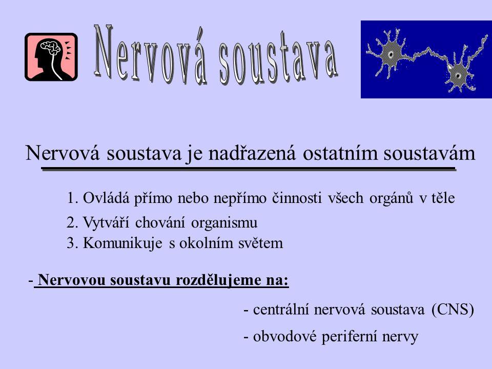 Nervová soustava je nadřazená ostatním soustavám - Nervovou soustavu rozdělujeme na: 1. Ovládá přímo nebo nepřímo činnosti všech orgánů v těle 2. Vytv