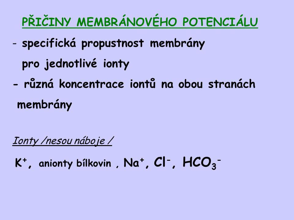 PŘIČINY MEMBRÁNOVÉHO POTENCIÁLU - specifická propustnost membrány pro jednotlivé ionty - různá koncentrace iontů na obou stranách membrány Ionty /neso