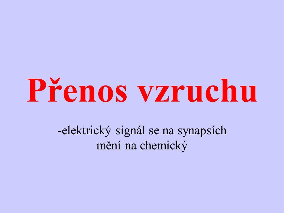 Přenos vzruchu -elektrický signál se na synapsích mění na chemický