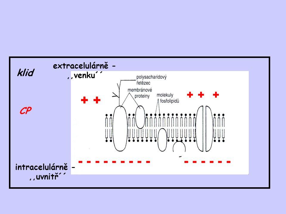 klid CP + + - - - - - - - - - extracelulárně -,,venku´´ intracelulárně -,,uvnitř´´ - - - + + +