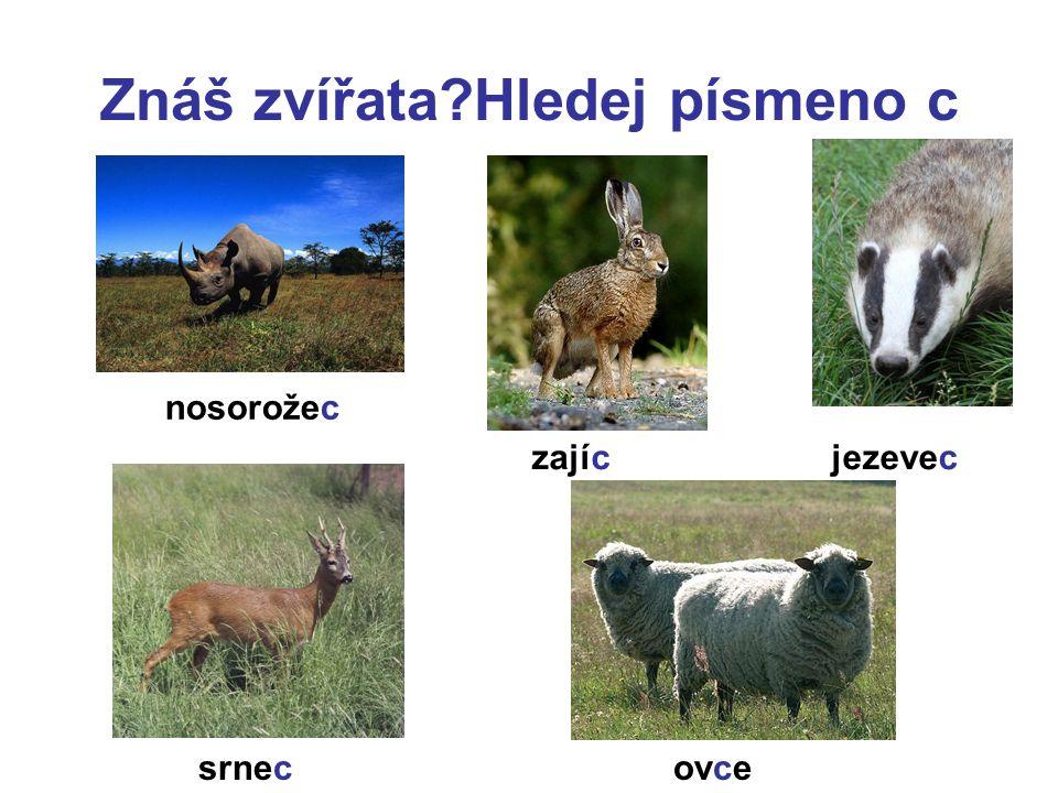 Znáš zvířata?Hledej písmeno c nosorožec zajíc srnecovce jezevec