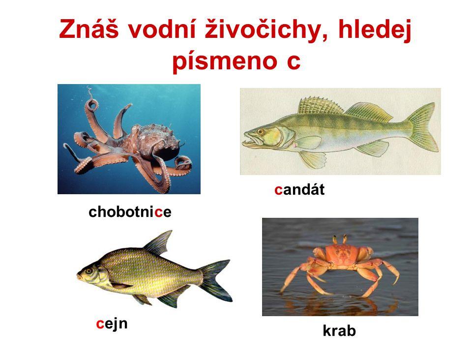 Znáš vodní živočichy, hledej písmeno c chobotnice candát cejn krab