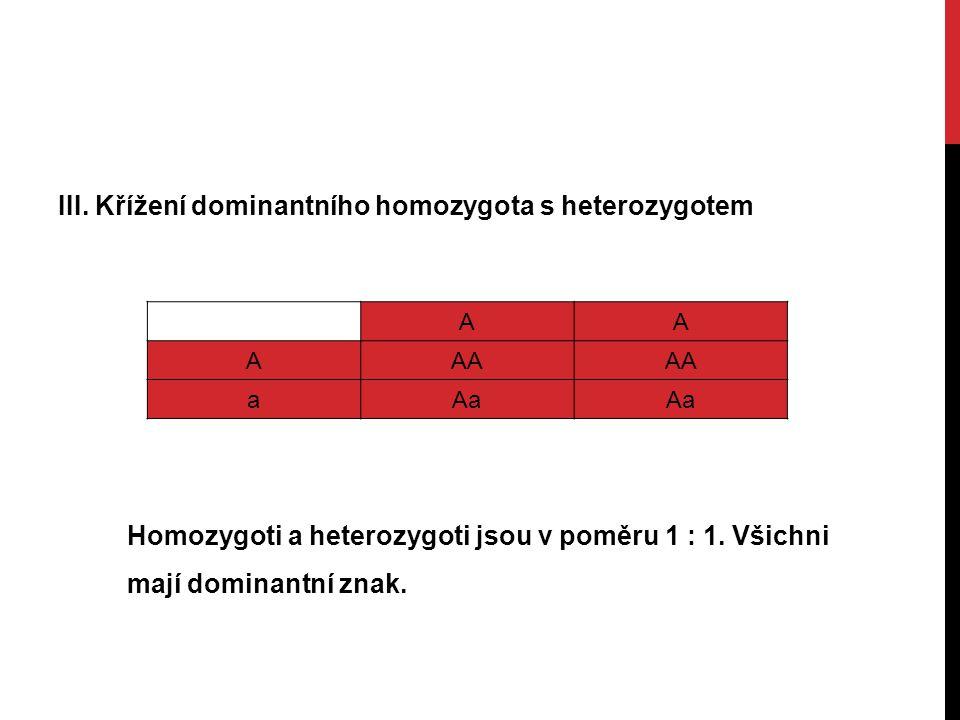 III. Křížení dominantního homozygota s heterozygotem AA AAA aAa Homozygoti a heterozygoti jsou v poměru 1 : 1. Všichni mají dominantní znak.