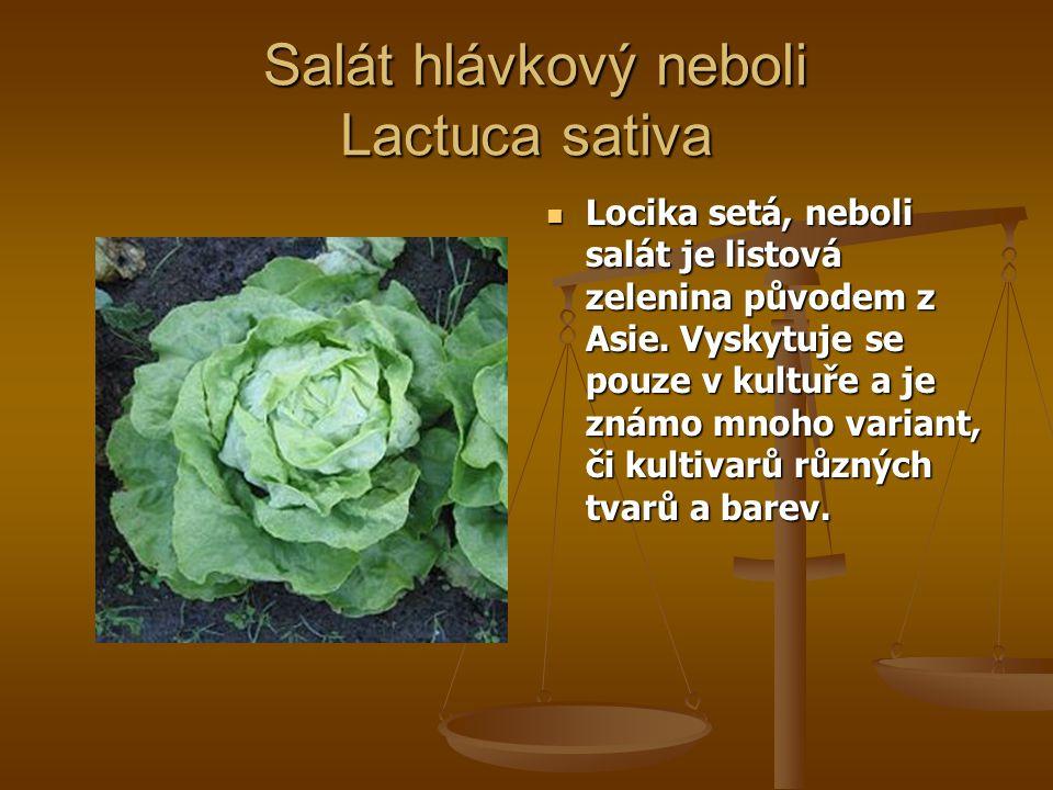 Salát hlávkový neboli Lactuca sativa Salát hlávkový neboli Lactuca sativa Locika setá, neboli salát je listová zelenina původem z Asie. Vyskytuje se p