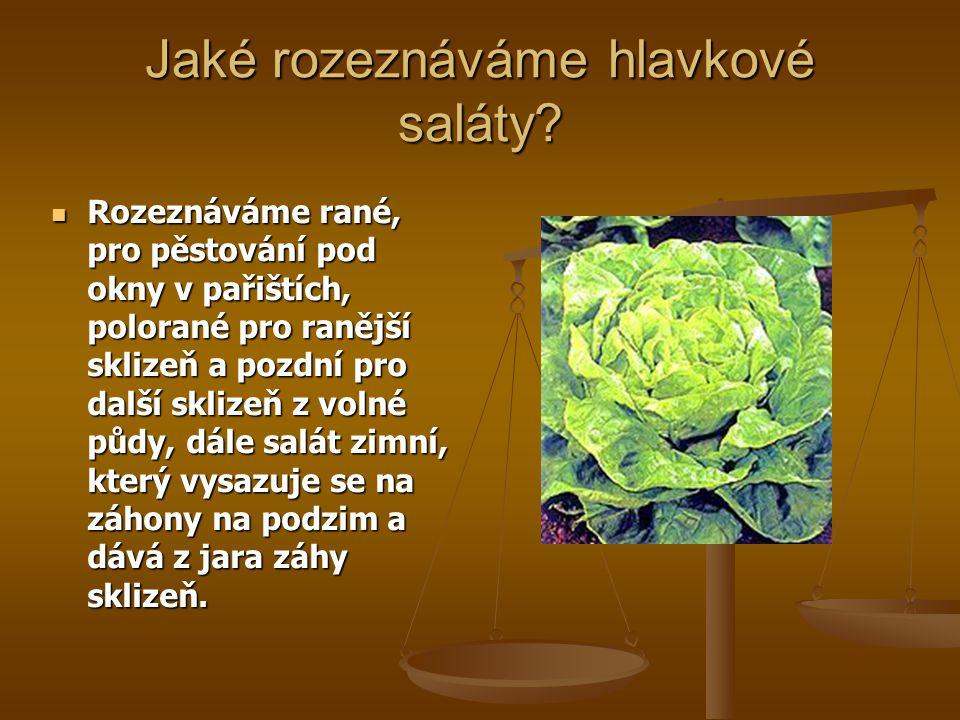 Jaké rozeznáváme hlavkové saláty? Rozeznáváme rané, pro pěstování pod okny v pařištích, polorané pro ranější sklizeň a pozdní pro další sklizeň z voln