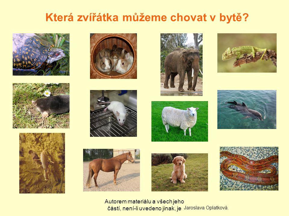 Autorem materiálu a všech jeho částí, není-li uvedeno jinak, je Která zvířátka můžeme chovat v bytě.