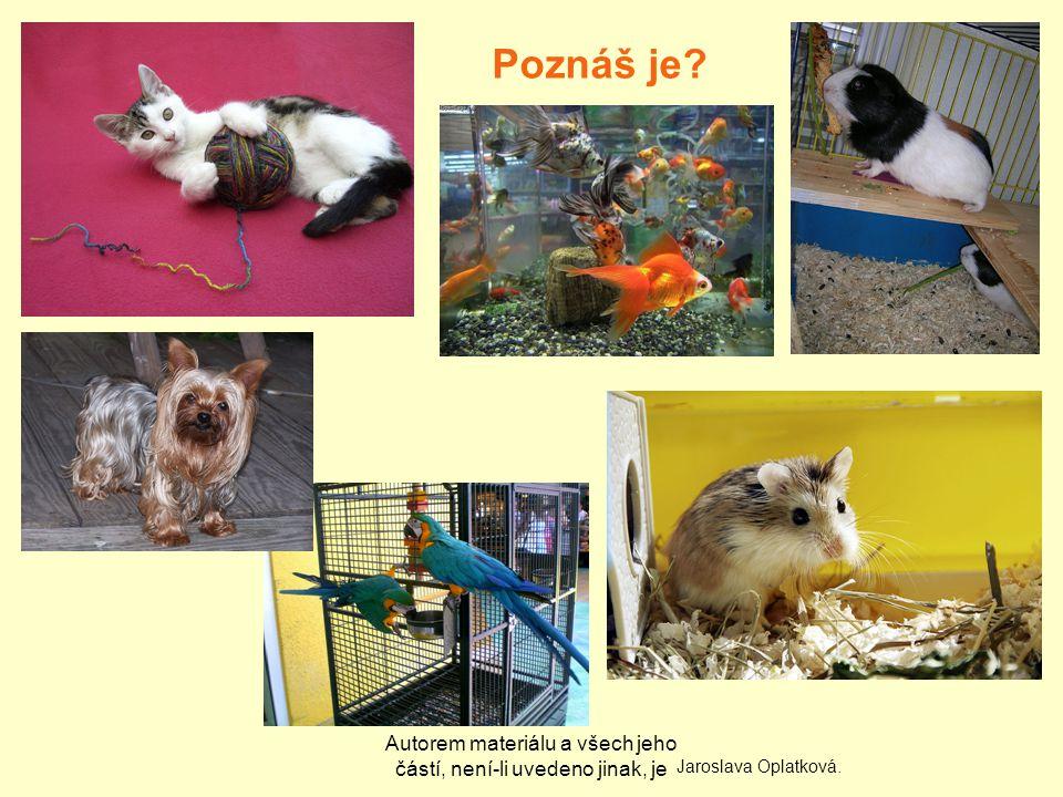 Autorem materiálu a všech jeho částí, není-li uvedeno jinak, je Poznáš je Jaroslava Oplatková.