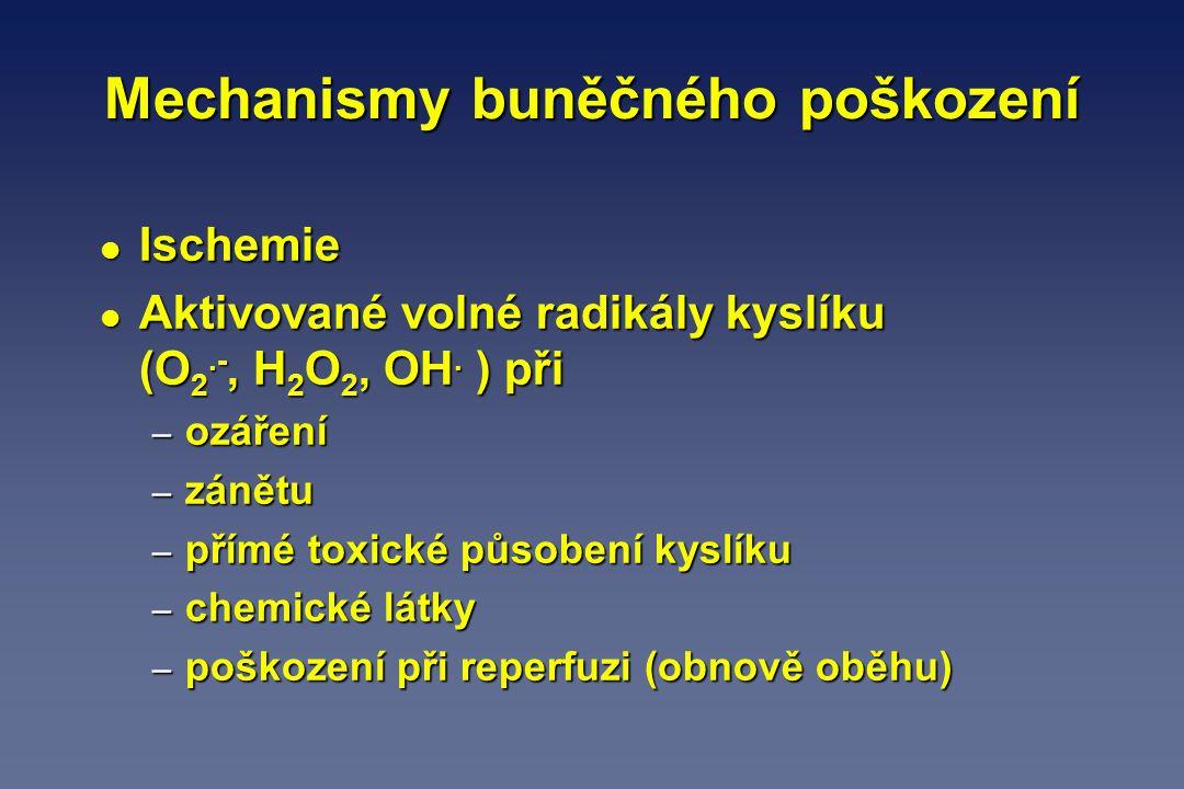 l Ischemie l Aktivované volné radikály kyslíku (O 2.-, H 2 O 2, OH. ) při – ozáření – zánětu – přímé toxické působení kyslíku – chemické látky – poško