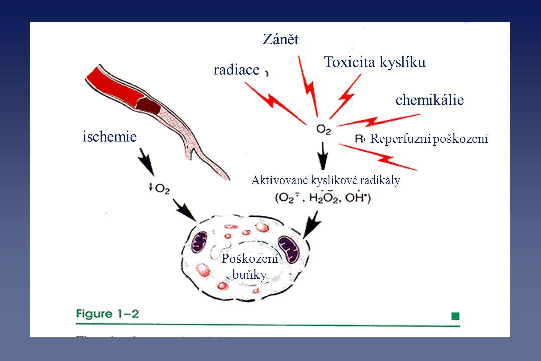 ischemie radiace Zánět Toxicita kyslíku chemikálie Reperfuzní poškození Aktivované kyslíkové radikály Poškození buňky